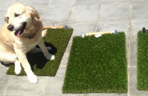 Dogs love our lawn! synthetic lawn, artificial lawn and fake grass turf
